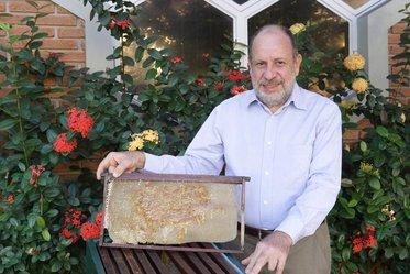 'Sociedade das abelhas' dita os rumos de Manoel