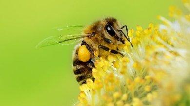 A surpreendente capacidade das abelhas de compreender o conceito do zero
