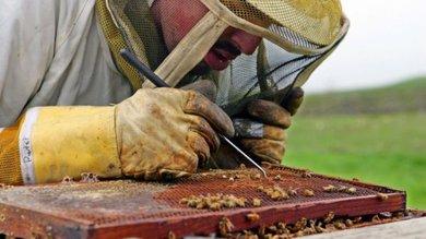 Cientistas descobrem o que está matando as abelhas é pior do que se pensava