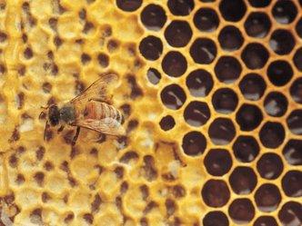 mel pode destruir bactéria resistente a antibióticos